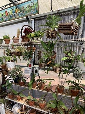 ショーンの蘭温室